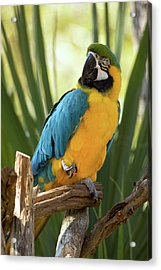 Colorful And Smart Acrylic Print