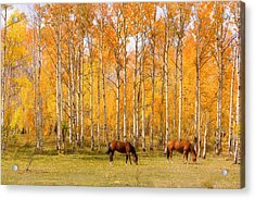 Colorful Autumn High Country Landscape Acrylic Print by James BO  Insogna