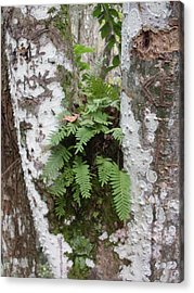 Colorful Bark And Fern Acrylic Print by Warren Thompson