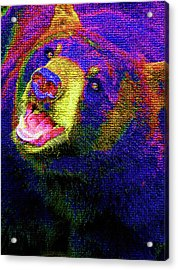 Colorful Bear Acrylic Print by Karol Livote