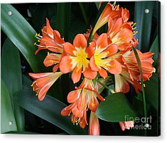Colorful Beauties Acrylic Print by Donna Parlow