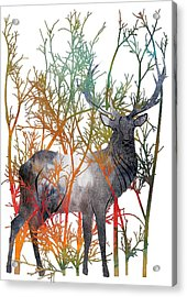 Colorful Buck 2 Acrylic Print by Diana Van