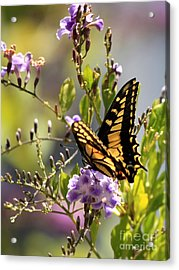 Colorful Butterfly Acrylic Print by Carol Groenen