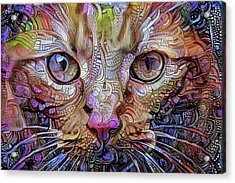 Colorful Cat Art Acrylic Print by Peggy Collins