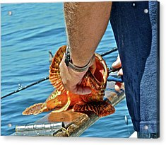 Colorful Catch Acrylic Print