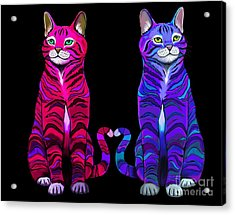 Colorful Cats Together Acrylic Print