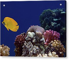 Colorful Coralreef Acrylic Print