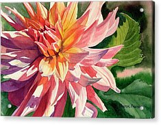 Colorful Dahlia Acrylic Print