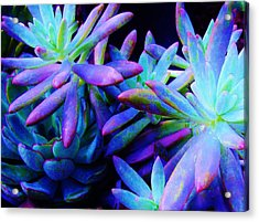 Colorful Dancing Succulents Acrylic Print