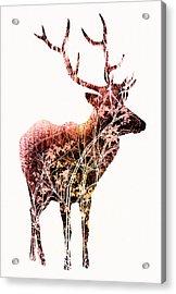 Colorful Deer Art - By Diana Van Acrylic Print by Diana Van