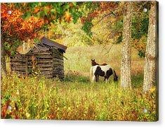 Colorful Display Acrylic Print