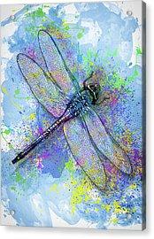 Colorful Dragonfly Acrylic Print by Jack Zulli