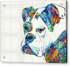 Colorful English Bulldog Art By Sharon Cummings Acrylic Print