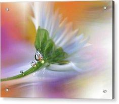 Colorful Explosion... Acrylic Print by Juliana Nan