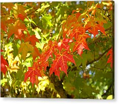 Colorful Fall Leaves Red Nature Landscape Baslee Troutman Acrylic Print by Baslee Troutman