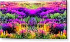 Colorful Field Of A Lavender Acrylic Print by Anton Kalinichev