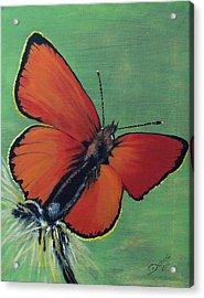 Colorful Flight Acrylic Print