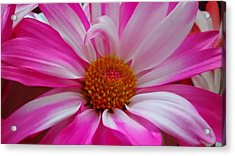 Colorful Flower Acrylic Print by Dustin Soph