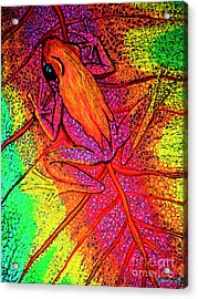 Colorful Frog On Leaf Acrylic Print by Nick Gustafson