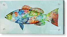 Colorful Gag Grouper Art Acrylic Print