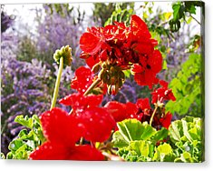 Colorful Garden II Acrylic Print by James Granberry