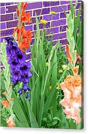 Colorful Gladiolas Acrylic Print