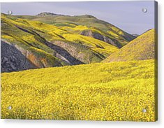 Acrylic Print featuring the photograph Colorful Hill And Golden Field by Marc Crumpler
