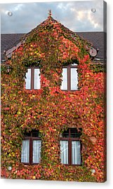 Colorful Ivy House Ireland Acrylic Print by Pierre Leclerc Photography