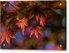Colorful Japanese Maple Acrylic Print