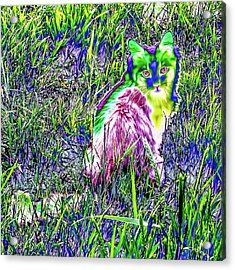 Colorful Kitty Acrylic Print