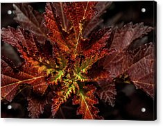 Acrylic Print featuring the photograph Colorful Leaves by Paul Freidlund