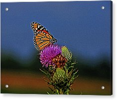 Acrylic Print featuring the photograph Colorful Monarch by Sandy Keeton