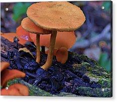 Colorful Mushrooms Acrylic Print by Robert Ulmer