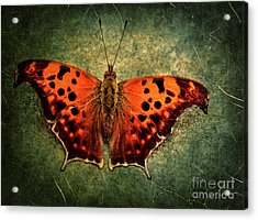 Colorful Orange Butterfly Acrylic Print by Photo Captures by Jeffery