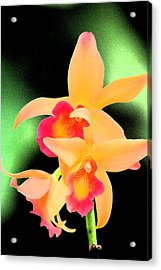 Colorful Orchid Acrylic Print by Nanette Hert