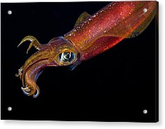 Colorful Oval Squid Acrylic Print