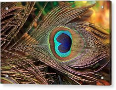 Colorful Peacock Feather Acrylic Print