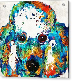 Colorful Poodle Dog Art By Sharon Cummings Acrylic Print by Sharon Cummings