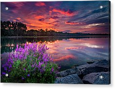 Colorful Presunrise Over Willow Bay Acrylic Print