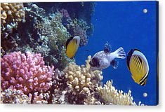 Colorful Red Sea Fish And Corals Acrylic Print
