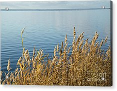 Colorful Reeds Acrylic Print