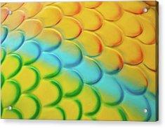 Colorful Scales Acrylic Print by Adam Romanowicz