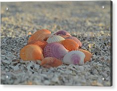 Acrylic Print featuring the photograph Colorful Scallop Shells by Melanie Moraga