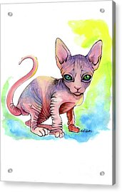 Colorful Sphynx Acrylic Print