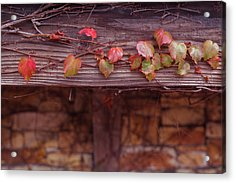 Colorful Tree Leaves Changing Color For Auyumn,fall Season In Oc Acrylic Print by Jingjits Photography