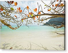 Colorful Tree North Shore Acrylic Print