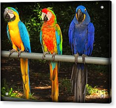 Colorful Trio Acrylic Print