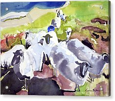 Colorful Waiting Sheep Acrylic Print