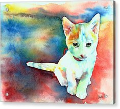 Colorfull Kitty Acrylic Print