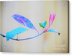 Colorfully Designed Acrylic Print